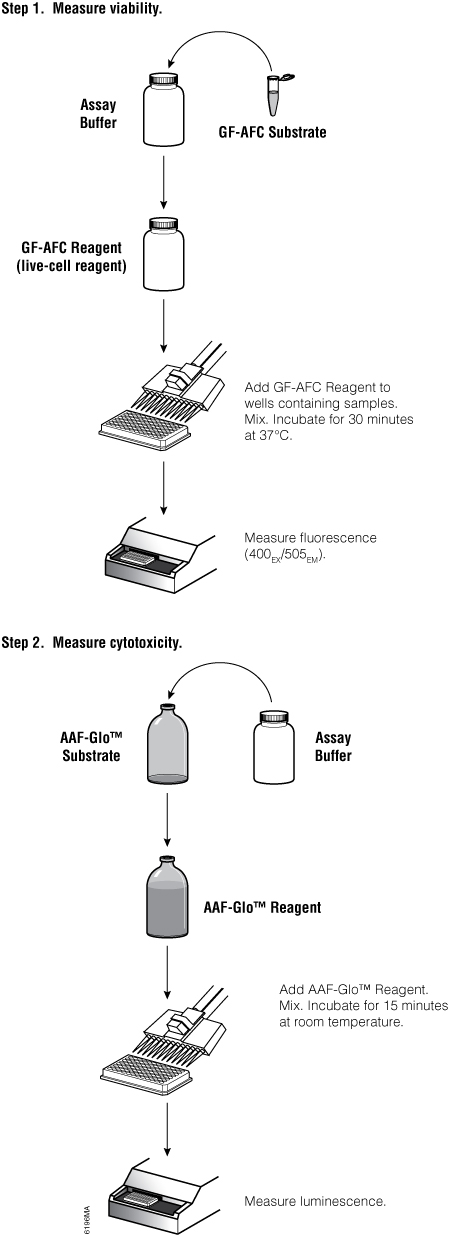 Overview of the MultiTox-Glo Multiplex Cytotoxicity Assay protocol.
